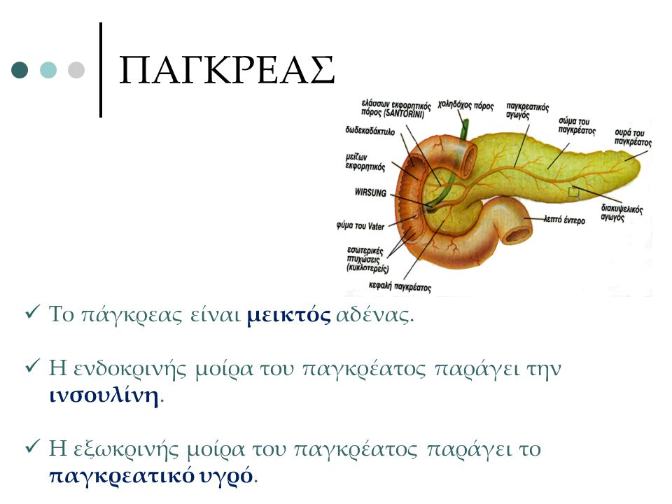 ΠΑΓΚΡΕΑΣ Το πάγκρεας είναι μεικτός αδένας. Η ενδοκρινής μοίρα του παγκρέατος παράγει την ινσουλίνη. Η εξωκρινής μοίρα του παγκρέατος παράγει το παγκρε