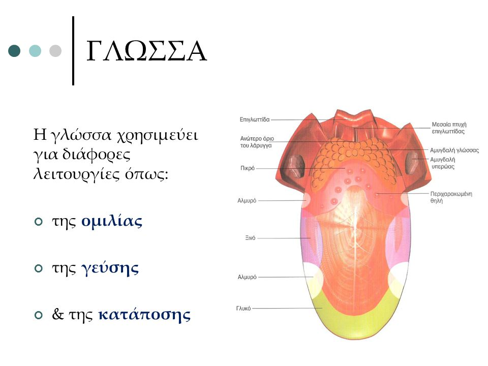 ΓΛΩΣΣΑ Η γλώσσα χρησιμεύει για διάφορες λειτουργίες όπως: της ομιλίας της γεύσης & της κατάποσης