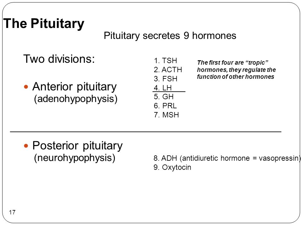 17 Two divisions: Anterior pituitary (adenohypophysis) Posterior pituitary (neurohypophysis) Pituitary secretes 9 hormones The Pituitary 1. TSH 2. ACT