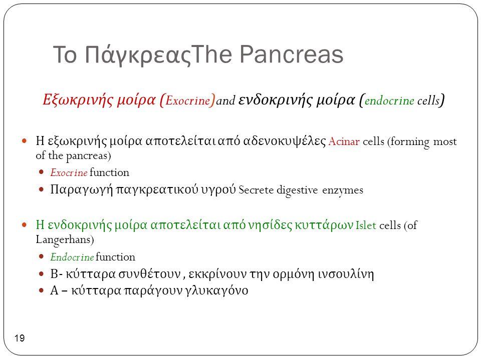 Το Πάγκρεας The Pancreas 19 Εξωκρινής μοίρα (Exocrine)and ενδοκρινής μοίρα (endocrine cells) Η εξωκρινής μοίρα αποτελείται από αδενοκυψέλες Acinar cel
