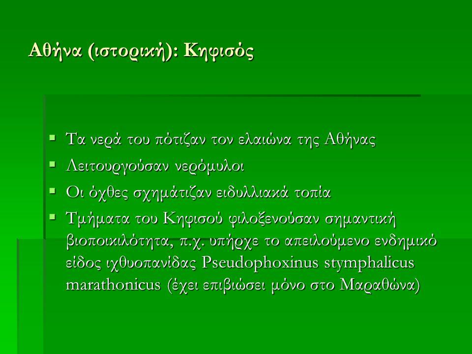 Αθήνα (ιστορική): Κηφισός  Τα νερά του πότιζαν τον ελαιώνα της Αθήνας  Λειτουργούσαν νερόμυλοι  Οι όχθες σχημάτιζαν ειδυλλιακά τοπία  Τμήματα του Κηφισού φιλοξενούσαν σημαντική βιοποικιλότητα, π.χ.