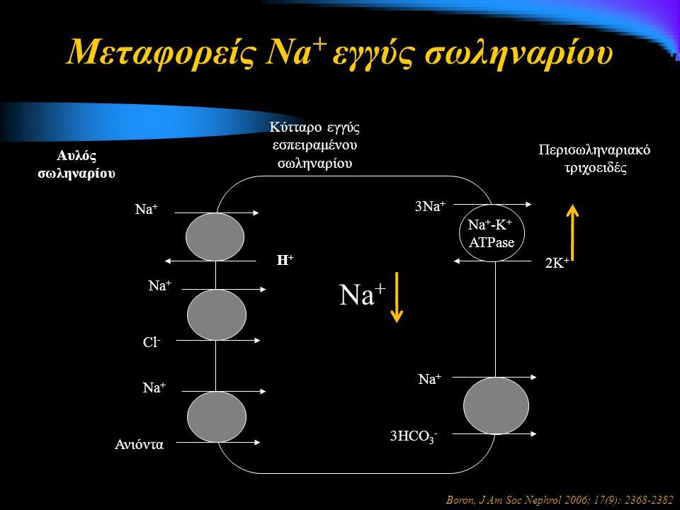 Μεταφορείς Νa + εγγύς σωληναρίου Na + 3HCO 3 - Η+Η+ Na + 3Na + 2K + Na + -K + ATPase Περισωληναριακό τριχοειδές Κύτταρο εγγύς εσπειραμένου σωληναρίου Αυλός σωληναρίου Na + Cl - Na + Ανιόντα Na + Boron, J Am Soc Nephrol 2006; 17(9): 2368-2382