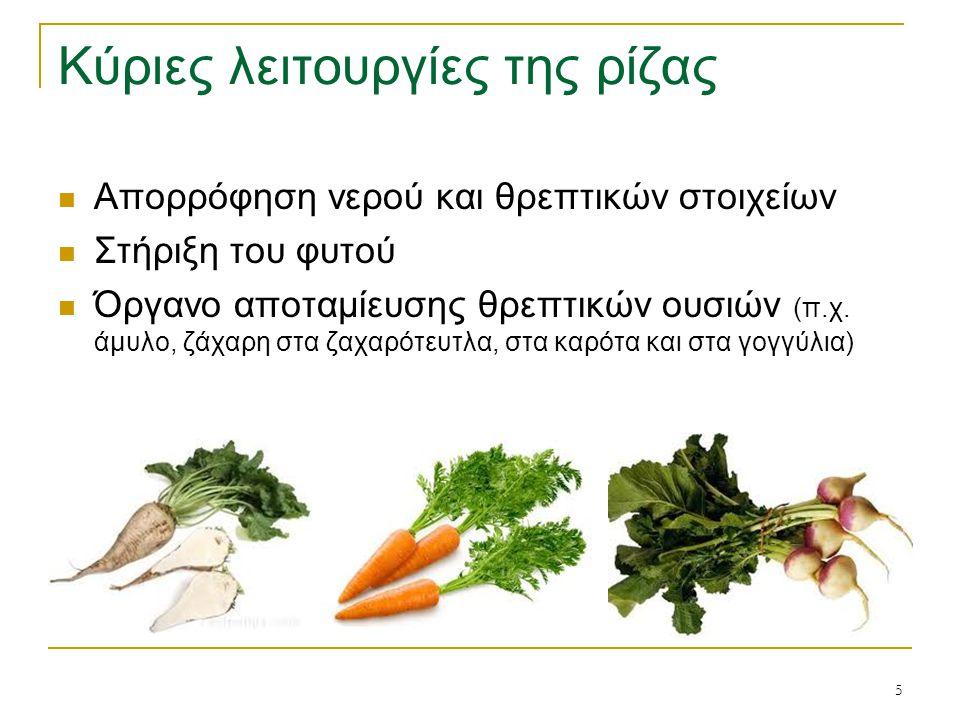 16 Σχήμα φύλλων Λογχοειδές (π.χ.στα σιτηρά) → Ωοειδές → (π.χ.