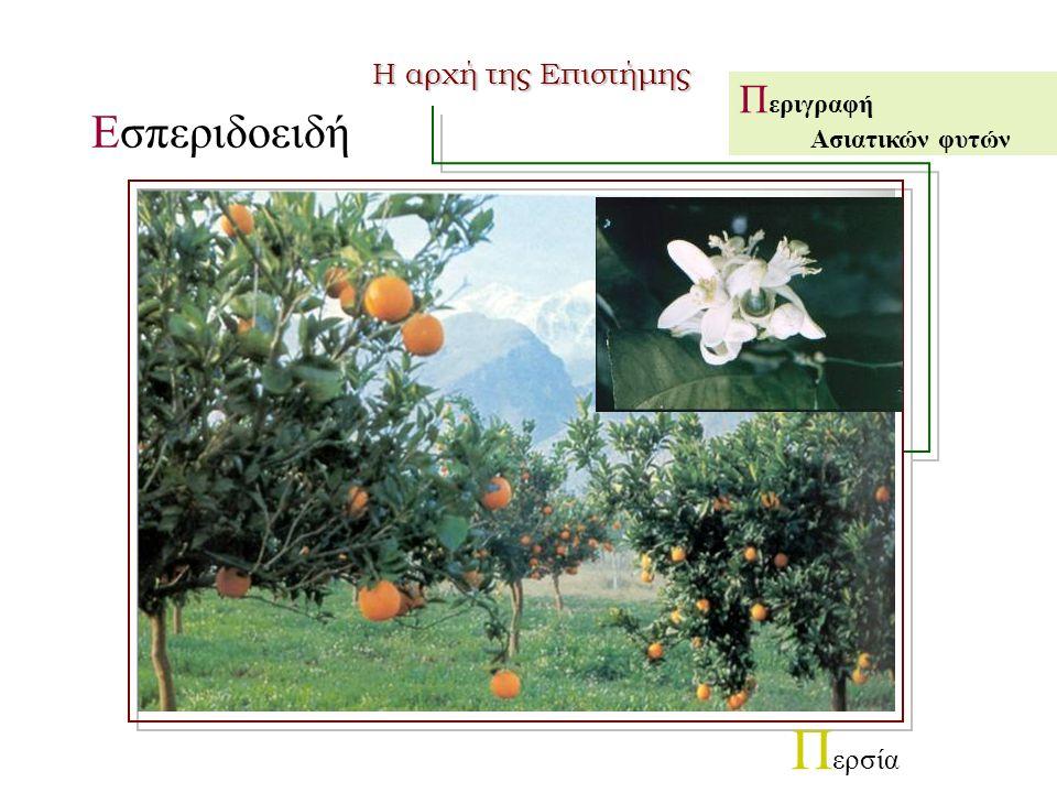 Εσπεριδοειδή Π εριγραφή Ασιατικών φυτών Π ερσία Η αρχή της Επιστήμης