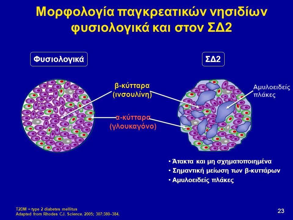 23 α-κύτταρα (γλoυκαγόνο) T2DM = type 2 diabetes mellitus Adapted from Rhodes CJ. Science. 2005; 307:380–384. ΦυσιολογικάΣΔ2 β-κύτταρα (ινσουλίνη) Άτα