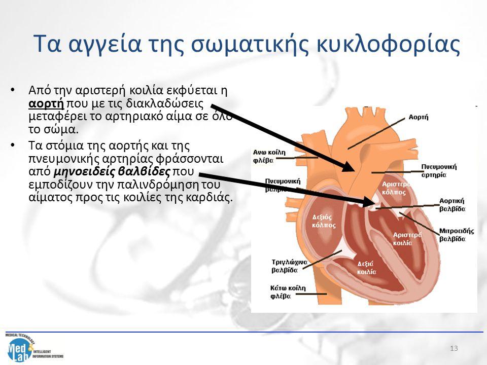 13 Από την αριστερή κοιλία εκφύεται η αορτή που με τις διακλαδώσεις μεταφέρει το αρτηριακό αίμα σε όλο το σώμα. Τα στόμια της αορτής και της πνευμονικ