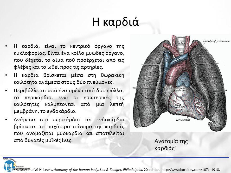 Η καρδιά Η καρδιά, είναι το κεντρικό όργανο της κυκλοφορίας. Είναι ένα κοίλο μυώδες όργανο, που δέχεται το αίμα πού προέρχεται από τις φλέβες και το ω
