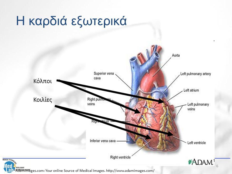 7 Η καρδιά εξωτερικά Περιβάλλεται από καρδιακό σάκο που περιλαμβάνει: – Διπέταλο περικάρδιο που περιέχει το περικαρδιακό υγρό.