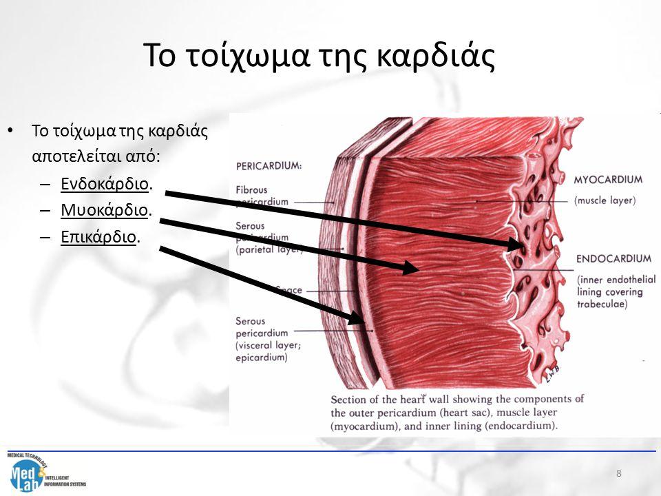 8 Το τοίχωμα της καρδιάς Το τοίχωμα της καρδιάς αποτελείται από: – Ενδοκάρδιο. – Μυοκάρδιο. – Επικάρδιο.
