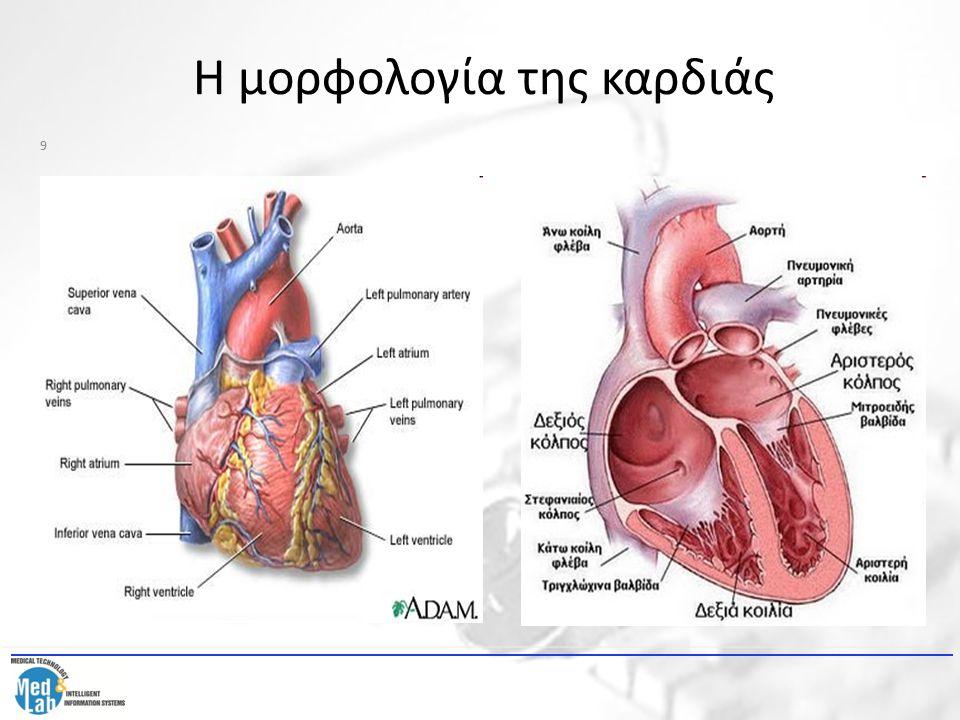 Η μορφολογία της καρδιάς 9