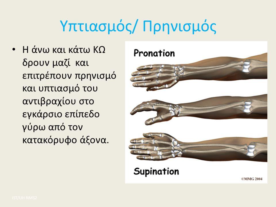 Υπτιασμός/ Πρηνισμός ΙST/UH NMS2 Η άνω και κάτω ΚΩ δρουν μαζί και επιτρέπουν πρηνισμό και υπτιασμό του αντιβραχίου στο εγκάρσιο επίπεδο γύρω από τον κ