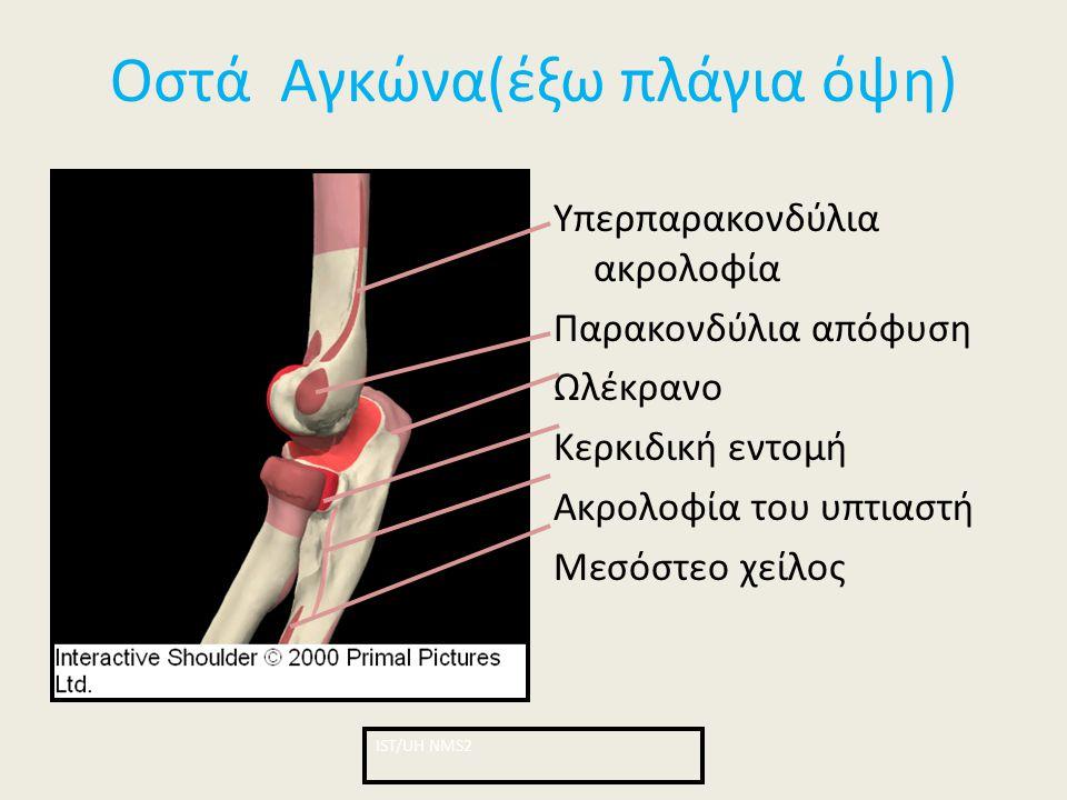Οστά Αγκώνα(έξω πλάγια όψη) Υπερπαρακονδύλια ακρολοφία Παρακονδύλια απόφυση Ωλέκρανο Κερκιδική εντομή Ακρολοφία του υπτιαστή Μεσόστεο χείλος ΙST/UH NM
