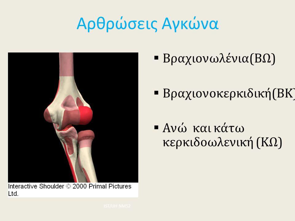 Αρθρώσεις Αγκώνα  Βραχιονωλένια(ΒΩ)  Βραχιονοκερκιδική(ΒΚ)  Ανώ και κάτω κερκιδοωλενική (ΚΩ) ΙST/UH NMS2