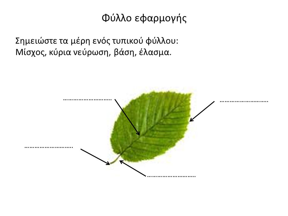 Φύλλο εφαρμογής Σημειώστε τα μέρη ενός τυπικού φύλλου: Μίσχος, κύρια νεύρωση, βάση, έλασμα. ………………………..