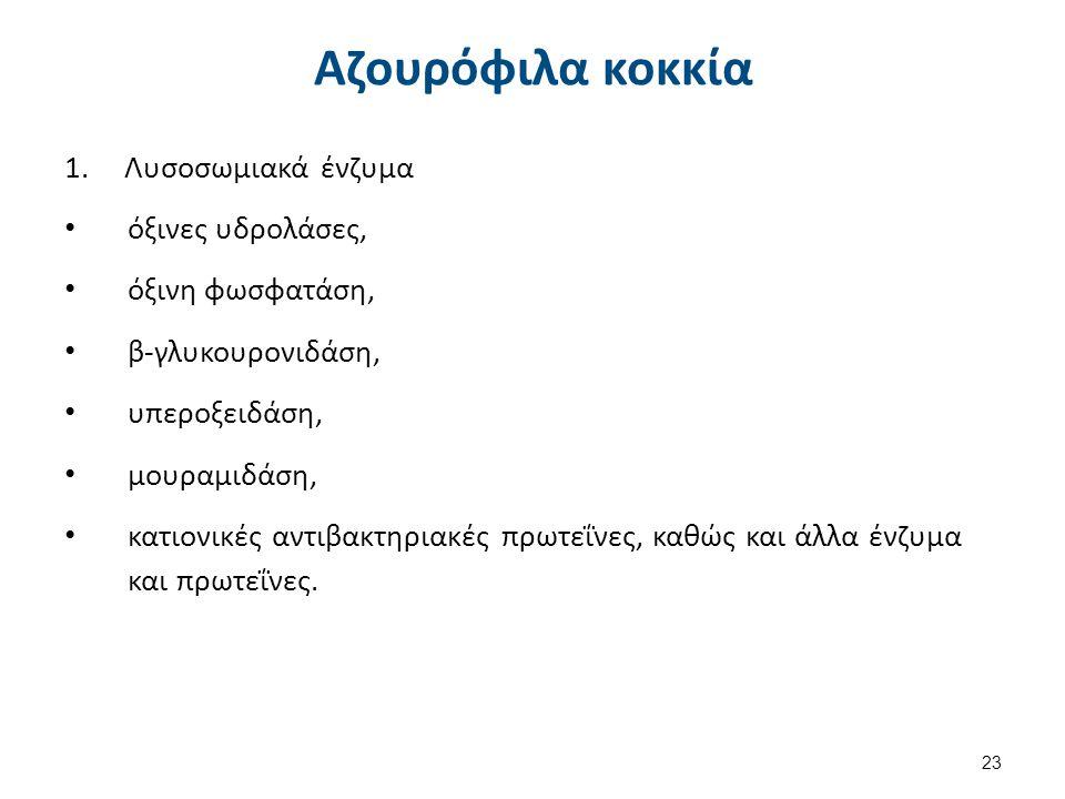 Αζουρόφιλα κοκκία 1.Λυσοσωμιακά ένζυμα όξινες υδρολάσες, όξινη φωσφατάση, β-γλυκουρονιδάση, υπεροξειδάση, μουραμιδάση, κατιονικές αντιβακτηριακές πρωτ