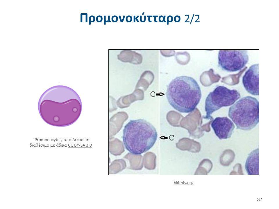 """Προμονοκύτταρο 2/2 37 hkimls.org """"Promonocyte"""", από Arcadian διαθέσιμο με άδεια CC BY-SA 3.0PromonocyteArcadianCC BY-SA 3.0"""