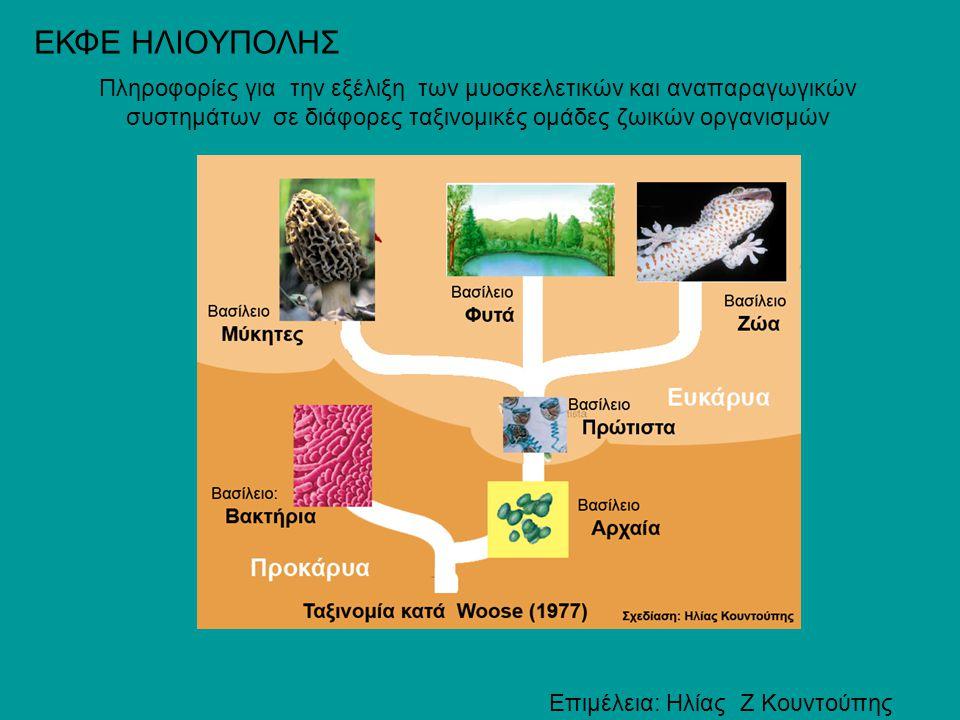 Πληροφορίες για την εξέλιξη των μυοσκελετικών και αναπαραγωγικών συστημάτων σε διάφορες ταξινομικές ομάδες ζωικών οργανισμών ΕΚΦΕ ΗΛΙΟΥΠΟΛΗΣ Επιμέλεια
