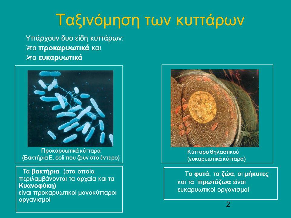 2 Ταξινόμηση των κυττάρων Τα φυτά, τα ζώα, οι μήκυτες και τα πρωτόζωα είναι ευκαρυωτικοί οργανισμοί Υπάρχουν δυο είδη κυττάρων:  τα προκαρυωτικά και