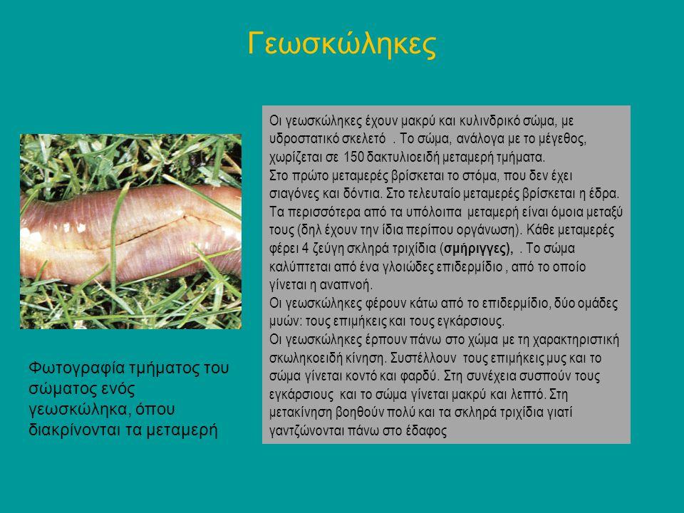 Φίδια Τα φίδια ανήκουν στα ερπετά Τα ερπετά είναι σπονδυλόζωαμε τα εξής χαρακτηριστικά γνωρίσματα: Το σώμα τους καλύπτεται με κεράτινες πλάκες, λέπια ή φολίδεςκ.α.