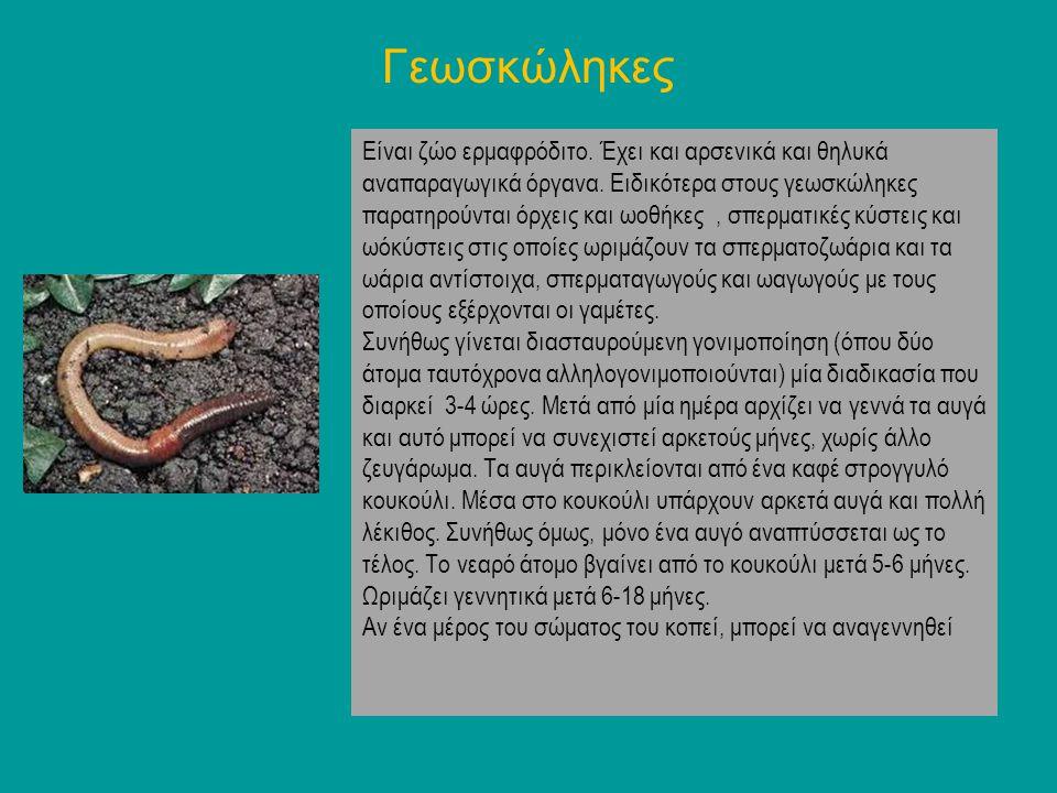 Σαλιγκάρι Το σώμα του σαλιγκαριού που είναι μαλακό και γλοιώδες,, αποτελείται από την κεφαλή (τα δίθυρα δεν έχουν κεφάλι), το σπλαχνικό σάκο και το πόδι και βρίσκεται μέσα σε ασβεστολιθικό ελικοειδές, όστρακο.