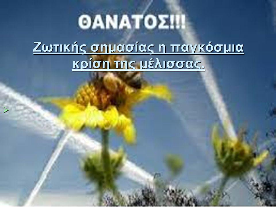 Ζωτικής σημασίας η παγκόσμια κρίση της μέλισσας. 