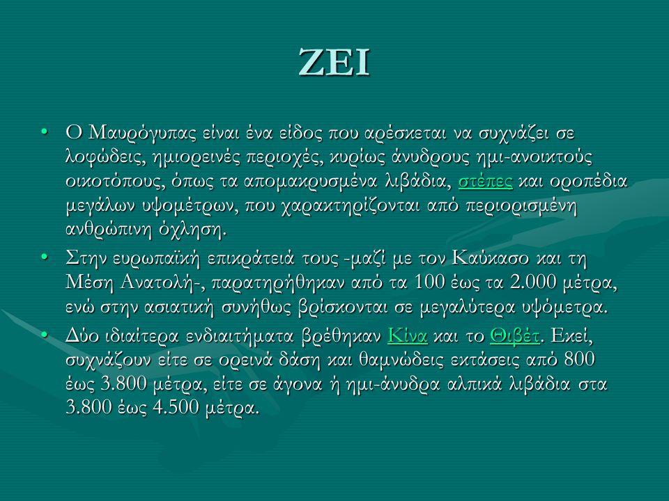 ZEI Ο Μαυρόγυπας είναι ένα είδος που αρέσκεται να συχνάζει σε λοφώδεις, ημιορεινές περιοχές, κυρίως άνυδρους ημι-ανοικτούς οικοτόπους, όπως τα απομακρυσμένα λιβάδια, στέπες και οροπέδια μεγάλων υψομέτρων, που χαρακτηρίζονται από περιορισμένη ανθρώπινη όχληση.Ο Μαυρόγυπας είναι ένα είδος που αρέσκεται να συχνάζει σε λοφώδεις, ημιορεινές περιοχές, κυρίως άνυδρους ημι-ανοικτούς οικοτόπους, όπως τα απομακρυσμένα λιβάδια, στέπες και οροπέδια μεγάλων υψομέτρων, που χαρακτηρίζονται από περιορισμένη ανθρώπινη όχληση.στέπες Στην ευρωπαϊκή επικράτειά τους -μαζί με τον Καύκασο και τη Μέση Ανατολή-, παρατηρήθηκαν από τα 100 έως τα 2.000 μέτρα, ενώ στην ασιατική συνήθως βρίσκονται σε μεγαλύτερα υψόμετρα.Στην ευρωπαϊκή επικράτειά τους -μαζί με τον Καύκασο και τη Μέση Ανατολή-, παρατηρήθηκαν από τα 100 έως τα 2.000 μέτρα, ενώ στην ασιατική συνήθως βρίσκονται σε μεγαλύτερα υψόμετρα.