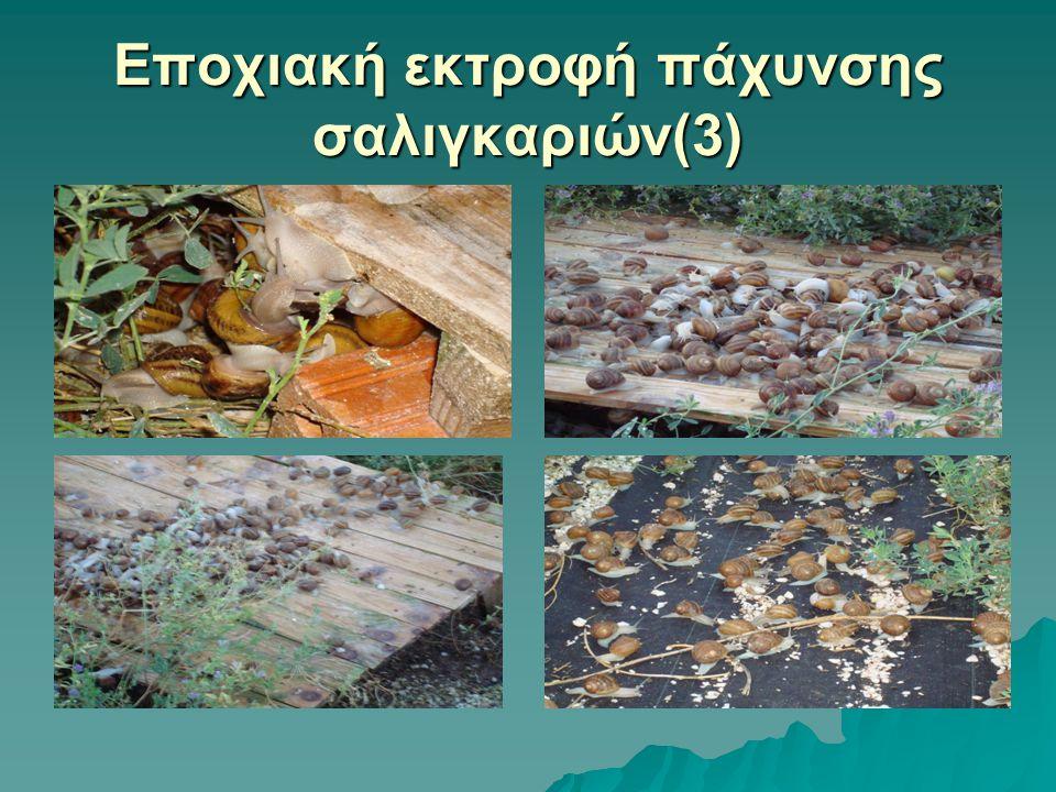 Εποχιακή εκτροφή πάχυνσης σαλιγκαριών(3)