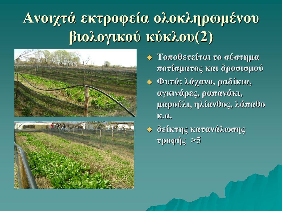 Ανοιχτά εκτροφεία ολοκληρωμένου βιολογικού κύκλου(2)  Τοποθετείται το σύστημα ποτίσματος και δροσισμού  Φυτά: λάχανο, ραδίκια, αγκινάρες, ραπανάκι,