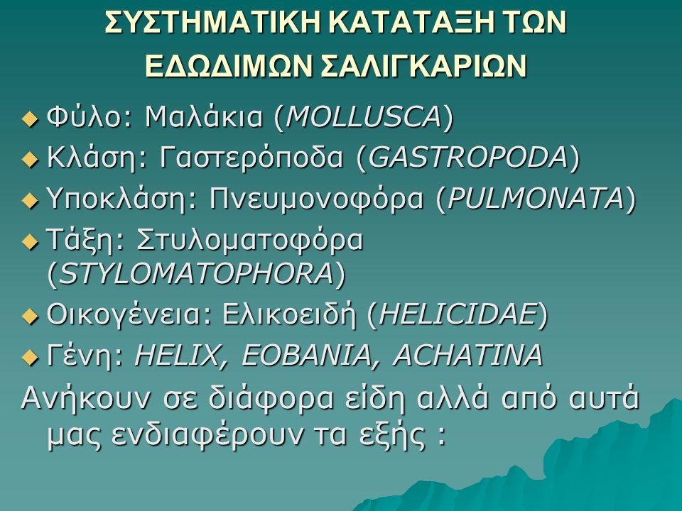 ΣΥΣΤΗΜΑΤΙΚΗ ΚΑΤΑΤΑΞΗ ΤΩΝ ΕΔΩΔΙΜΩΝ ΣΑΛΙΓΚΑΡΙΩΝ  Φύλο: Μαλάκια (MOLLUSCA)  Κλάση: Γαστερόποδα (GASTROPODA)  Υποκλάση: Πνευμονοφόρα (PULMONATA)  Τάξη