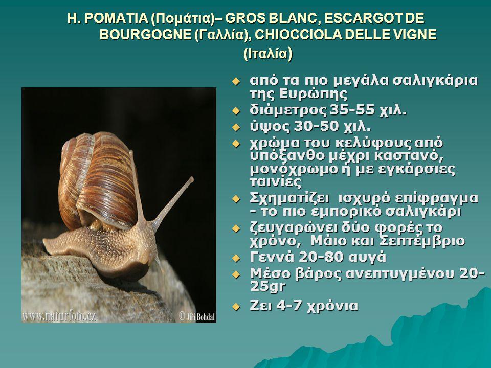 Η. POMATIA (Πομάτια)– GROS BLANC, ESCARGOT DE BOURGOGNE (Γαλλία), CHIOCCIOLA DELLE VIGNE (Ιταλία )  από τα πιο μεγάλα σαλιγκάρια της Ευρώπης  διάμετ