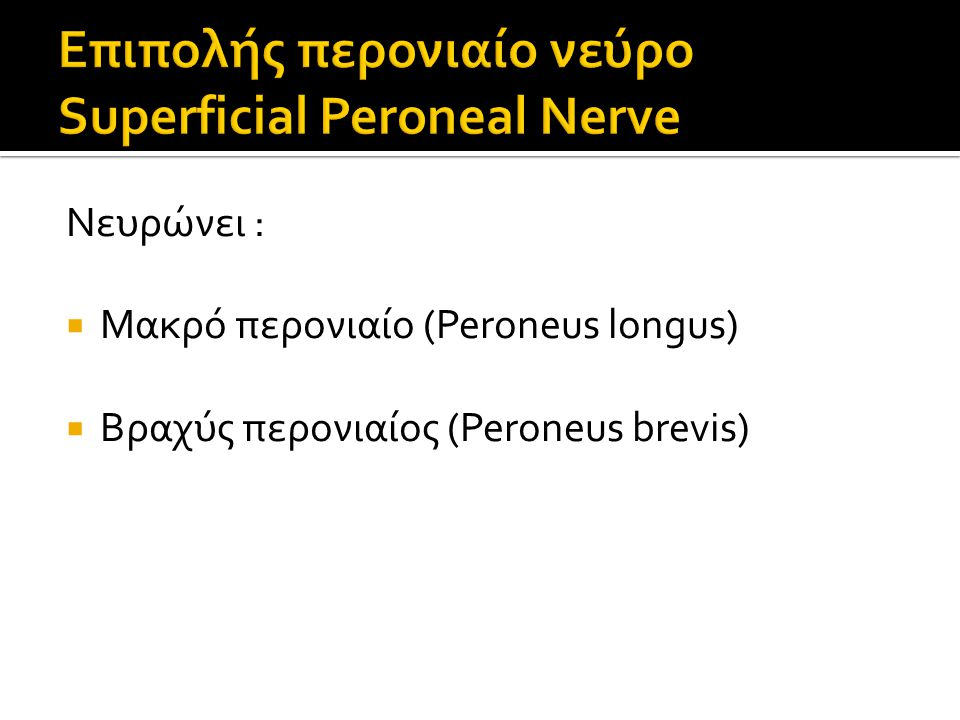 Νευρώνει :  Μακρό περονιαίο (Peroneus longus)  Βραχύς περονιαίος (Peroneus brevis)