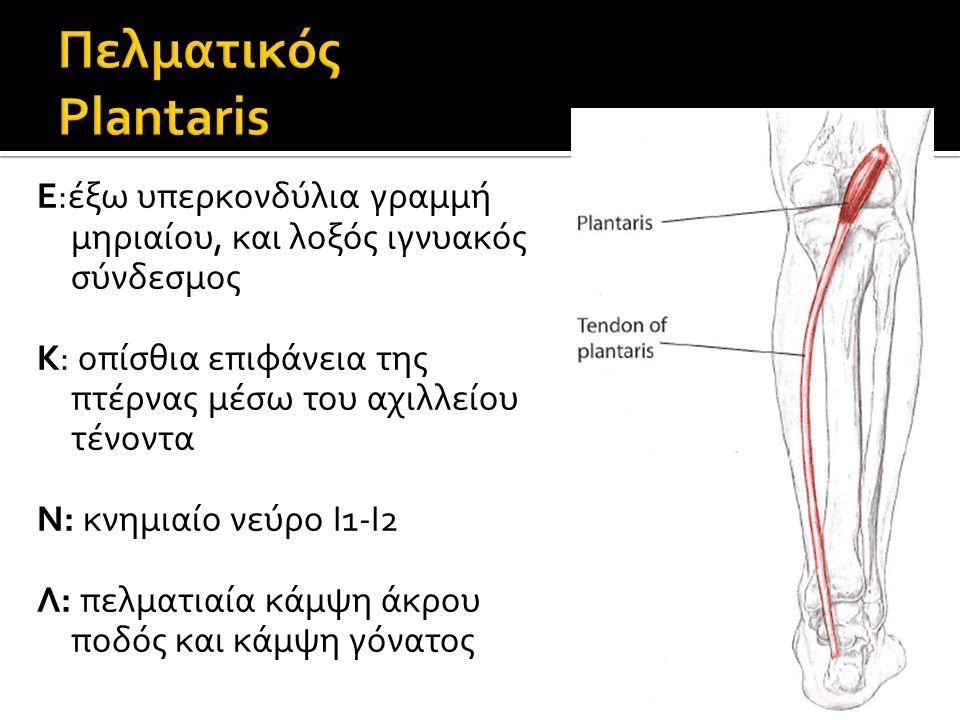Ε:έξω υπερκονδύλια γραμμή μηριαίου, και λοξός ιγνυακός σύνδεσμος Κ: οπίσθια επιφάνεια της πτέρνας μέσω του αχιλλείου τένοντα Ν: κνημιαίο νεύρο Ι1-Ι2 Λ: πελματιαία κάμψη άκρου ποδός και κάμψη γόνατος
