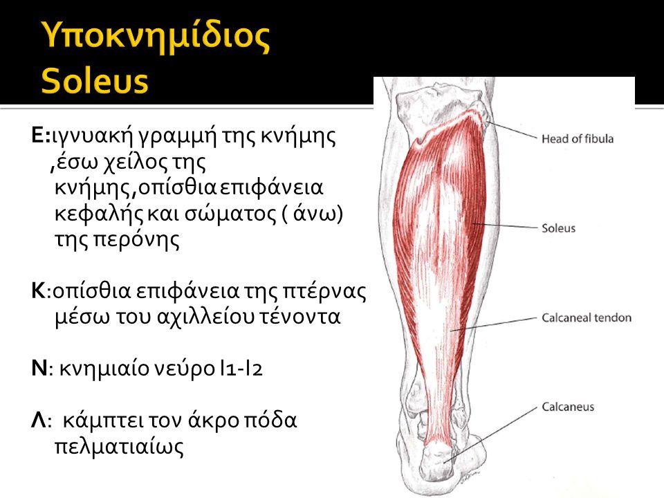 Ε:ιγνυακή γραμμή της κνήμης,έσω χείλος της κνήμης,οπίσθια επιφάνεια κεφαλής και σώματος ( άνω) της περόνης Κ:οπίσθια επιφάνεια της πτέρνας μέσω του αχ