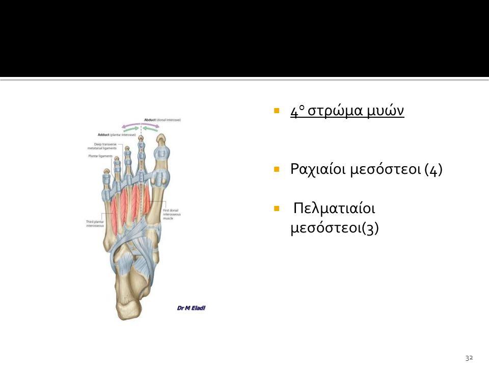  4 ο στρώμα μυών  Ραχιαίοι μεσόστεοι (4)  Πελματιαίοι μεσόστεοι(3) 32