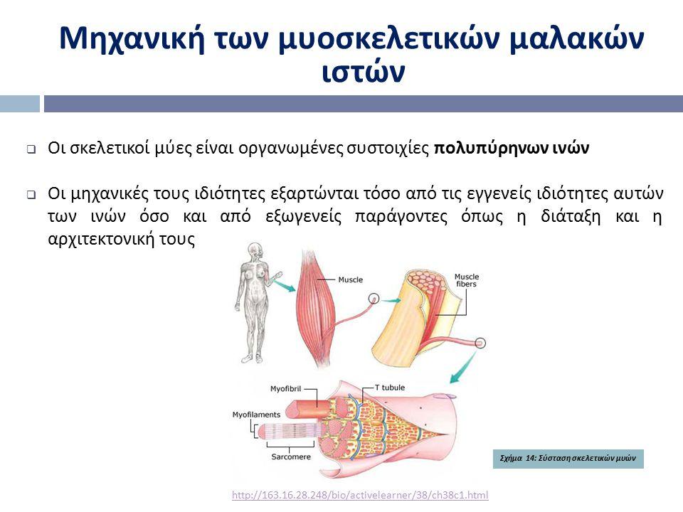 Μηχανική των μυοσκελετικών μαλακών ιστών  Οι σκελετικοί μύες είναι οργανωμένες συστοιχίες πολυπύρηνων ινών  Οι μηχανικές τους ιδιότητες εξαρτώνται τ
