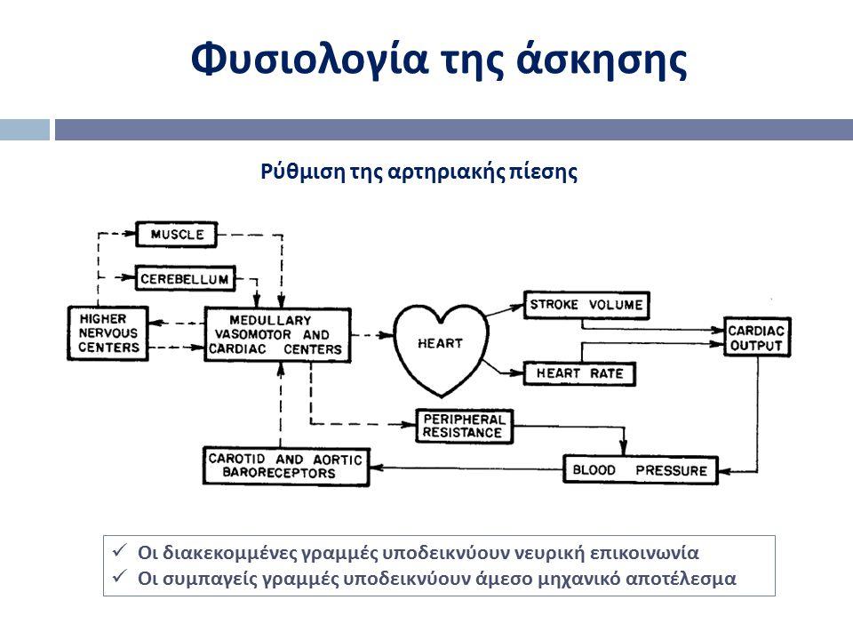 Φυσιολογία της άσκησης Οι διακεκομμένες γραμμές υποδεικνύουν νευρική επικοινωνία Οι συμπαγείς γραμμές υποδεικνύουν άμεσο μηχανικό αποτέλεσμα Ρύθμιση τ