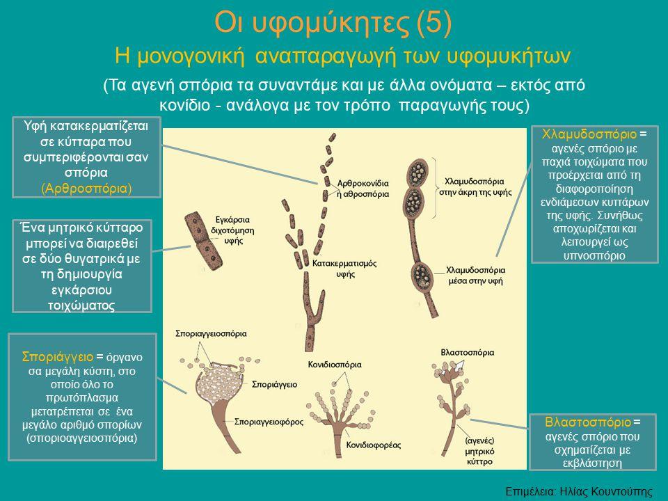 Οι υφομύκητες (5) Η μονογονική αναπαραγωγή των υφομυκήτων (Τα αγενή σπόρια τα συναντάμε και με άλλα ονόματα – εκτός από κονίδιο - ανάλογα με τον τρόπο