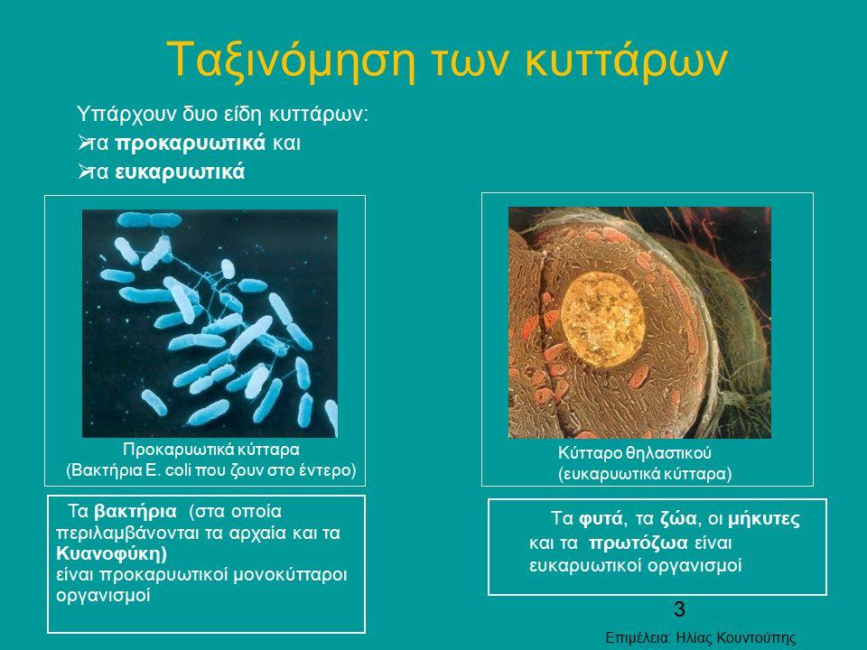 3 Ταξινόμηση των κυττάρων Τα φυτά, τα ζώα, οι μήκυτες και τα πρωτόζωα είναι ευκαρυωτικοί οργανισμοί Υπάρχουν δυο είδη κυττάρων:  τα προκαρυωτικά και
