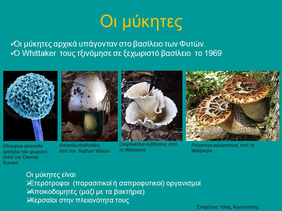 Οι μύκητες αρχικά υπάγονταν στο βασίλειο των Φυτών. Ο Whittaker τους τξινόμησε σε ξεχωριστό βασίλειο το 1969 [1 [1 Οι μύκητες Rhizopus stolonifer (μού
