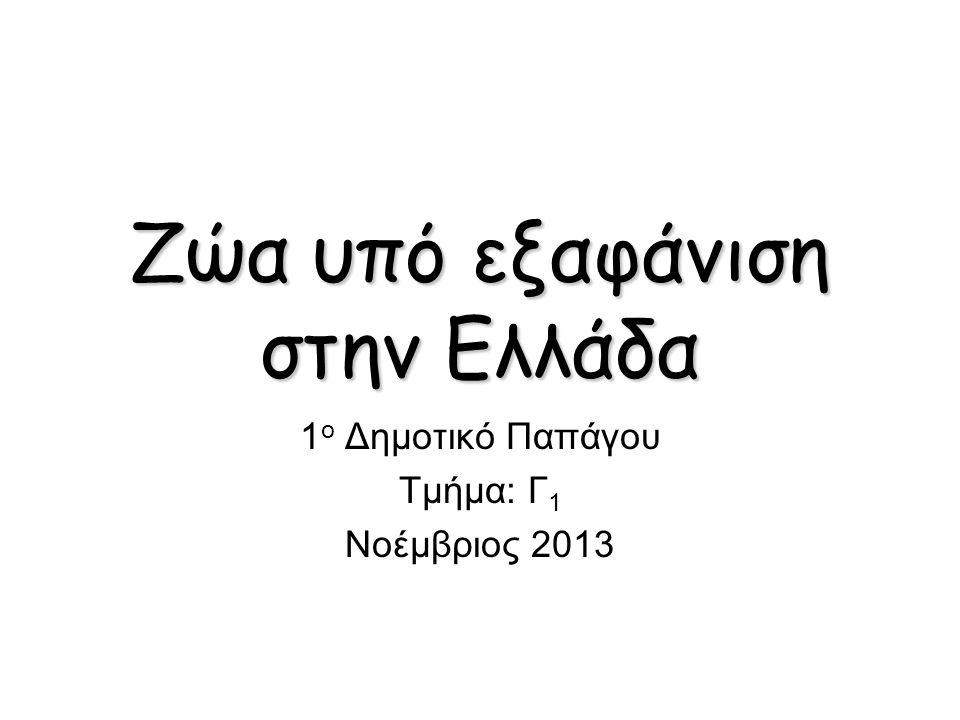 Zώα υπό εξαφάνιση στην Ελλάδα 1 ο Δημοτικό Παπάγου Τμήμα: Γ 1 Νοέμβριος 2013