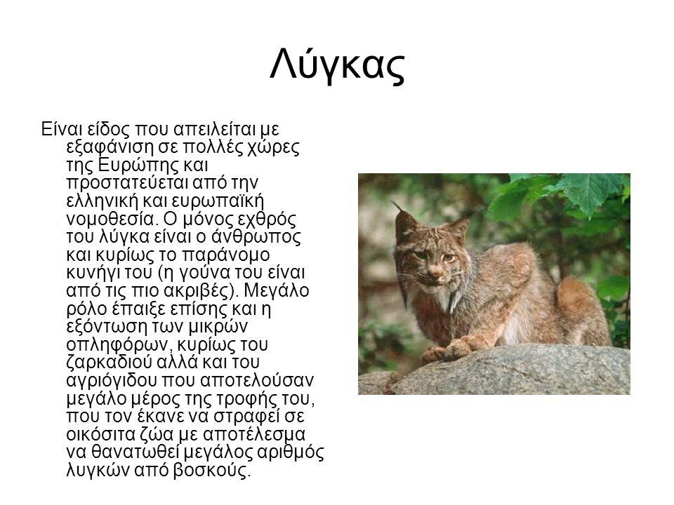 Λύγκας Είναι είδος που απειλείται με εξαφάνιση σε πολλές χώρες της Ευρώπης και προστατεύεται από την ελληνική και ευρωπαϊκή νομοθεσία.