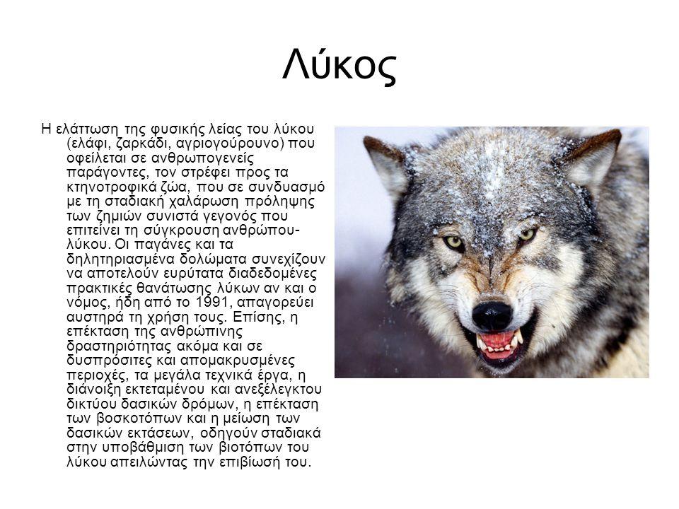 Λύκος Η ελάττωση της φυσικής λείας του λύκου (ελάφι, ζαρκάδι, αγριογούρουνο) που οφείλεται σε ανθρωπογενείς παράγοντες, τον στρέφει προς τα κτηνοτροφικά ζώα, που σε συνδυασμό με τη σταδιακή χαλάρωση πρόληψης των ζημιών συνιστά γεγονός που επιτείνει τη σύγκρουση ανθρώπου- λύκου.