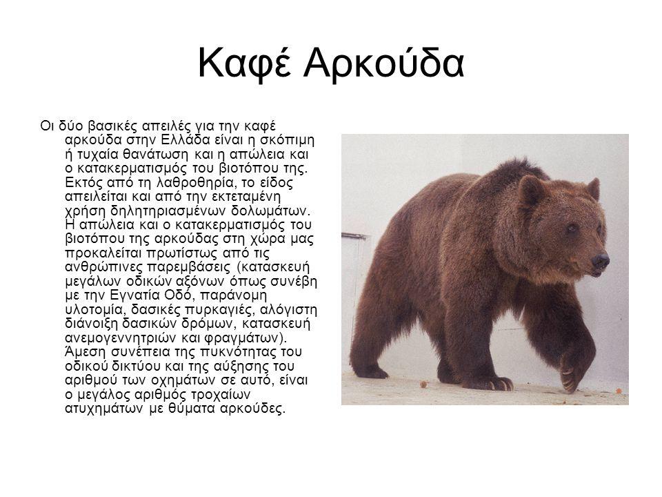 Καφέ Αρκούδα Οι δύο βασικές απειλές για την καφέ αρκούδα στην Ελλάδα είναι η σκόπιμη ή τυχαία θανάτωση και η απώλεια και ο κατακερματισμός του βιοτόπου της.
