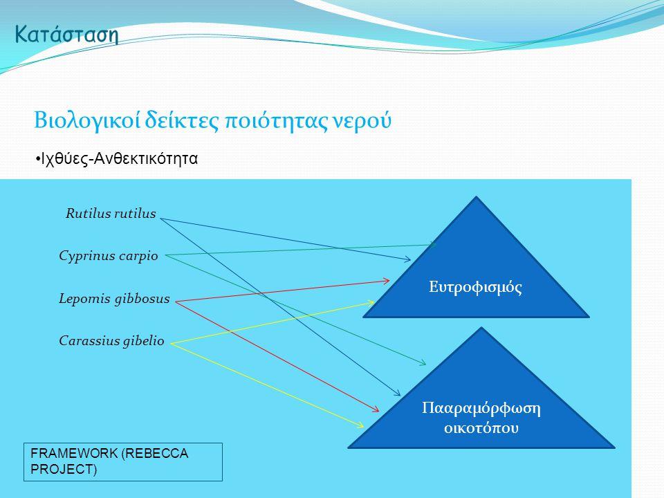 Rutilus rutilus Cyprinus carpio Lepomis gibbosus Carassius gibelio Βιολογικοί δείκτες ποιότητας νερού Ιχθύες-Ανθεκτικότητα Ευτροφισμός Πααραμόρφωση οικοτόπου FRAMEWORK (REBECCA PROJECT)