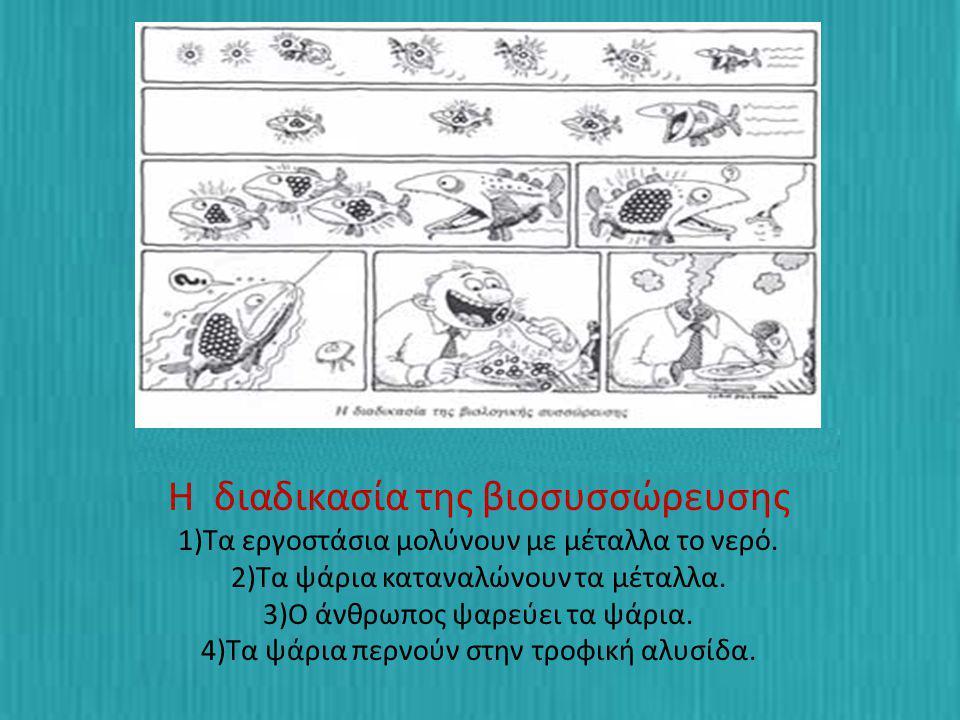 Η διαδικασία της βιοσυσσώρευσης 1)Τα εργοστάσια μολύνουν με μέταλλα το νερό. 2)Τα ψάρια καταναλώνουν τα μέταλλα. 3)Ο άνθρωπος ψαρεύει τα ψάρια. 4)Τα ψ