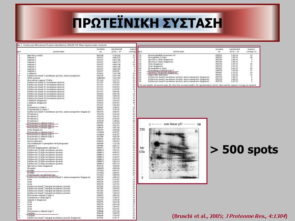 (Bruschi et al., 2005; J Proteome Res., 4:1304) > 500 spots ΠΡΩΤΕΪΝΙΚΗ ΣΥΣΤΑΣΗ