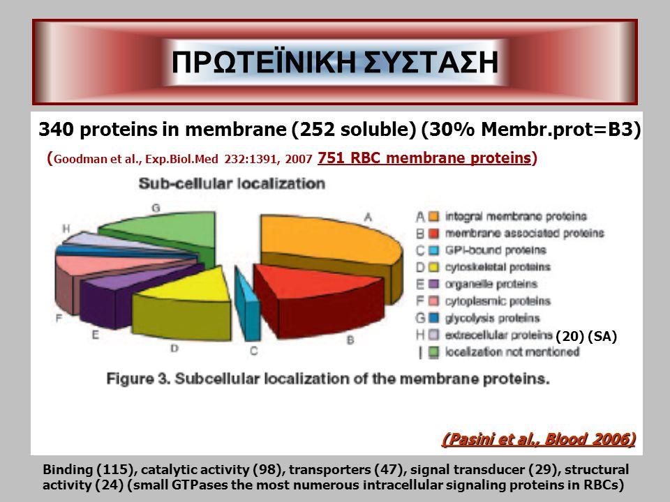 ΠΡΩΤΕΪΝΙΚΗ ΣΥΣΤΑΣΗ (Pasini et al., Blood 2006) 340 proteins in membrane (252 soluble) (30% Membr.prot=B3) Binding (115), catalytic activity (98), transporters (47), signal transducer (29), structural activity (24) (small GTPases the most numerous intracellular signaling proteins in RBCs) (20) (SA) ( Goodman et al., Exp.Biol.Med 232:1391, 2007 751 RBC membrane proteins)