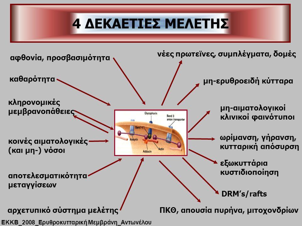 4 ΔΕΚΑΕΤΙΕΣ ΜΕΛΕΤΗΣ αφθονία, προσβασιμότητα αρχετυπικό σύστημα μελέτης νέες πρωτεϊνες, συμπλέγματα, δομές καθαρότητα κληρονομικές μεμβρανοπάθειες κοινές αιματολογικές (και μη-) νόσοι μη-ερυθροειδή κύτταρα μη-αιματολογικοί κλινικοί φαινότυποι ωρίμανση, γήρανση, κυτταρική απόσυρση ΠΚΘ, απουσία πυρήνα, μιτοχονδρίων αποτελεσματικότητα μεταγγίσεων εξωκυττάρια κυστιδιοποίηση DRM's/rafts ΕΚΚΒ_2008_Ερυθροκυτταρική Μεμβράνη_Αντωνέλου
