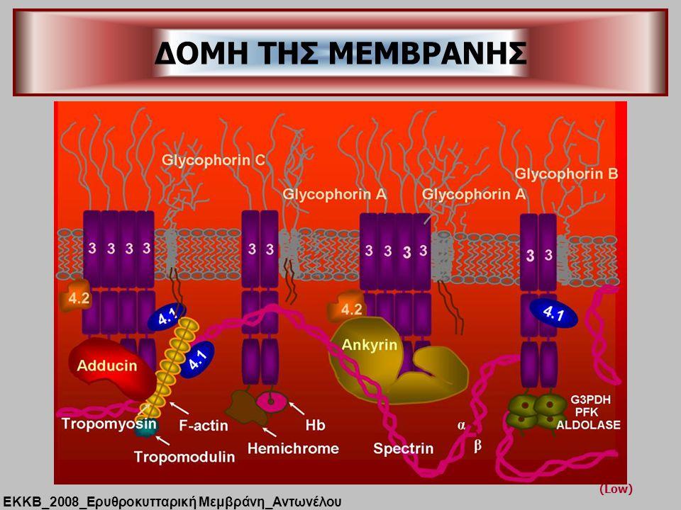 (Low) ΔΟΜΗ ΤΗΣ ΜΕΜΒΡΑΝΗΣ ΕΚΚΒ_2008_Ερυθροκυτταρική Μεμβράνη_Αντωνέλου