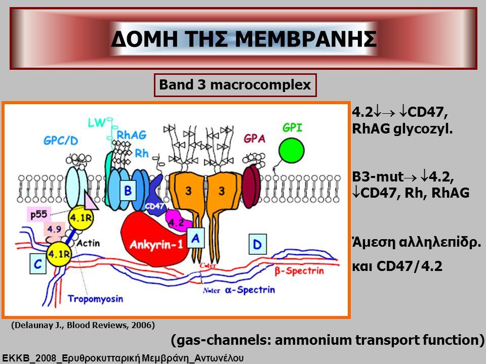 (Delaunay J., Blood Reviews, 2006) ΔΟΜΗ ΤΗΣ ΜΕΜΒΡΑΝΗΣ ΕΚΚΒ_2008_Ερυθροκυτταρική Μεμβράνη_Αντωνέλου (gas-channels: ammonium transport function) Band 3 macrocomplex 4.2   CD47, RhAG glycozyl.